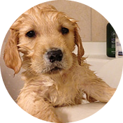 bathing.png