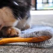 brushing.png