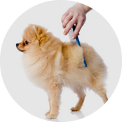 dog-grooming.png