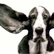 ears.png
