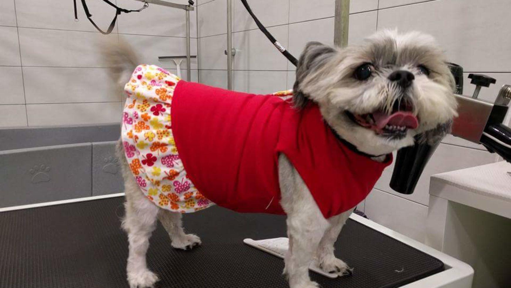 Καλλωπισμος σκύλου  Σιχ τσου -Dog grooming Shih tzu