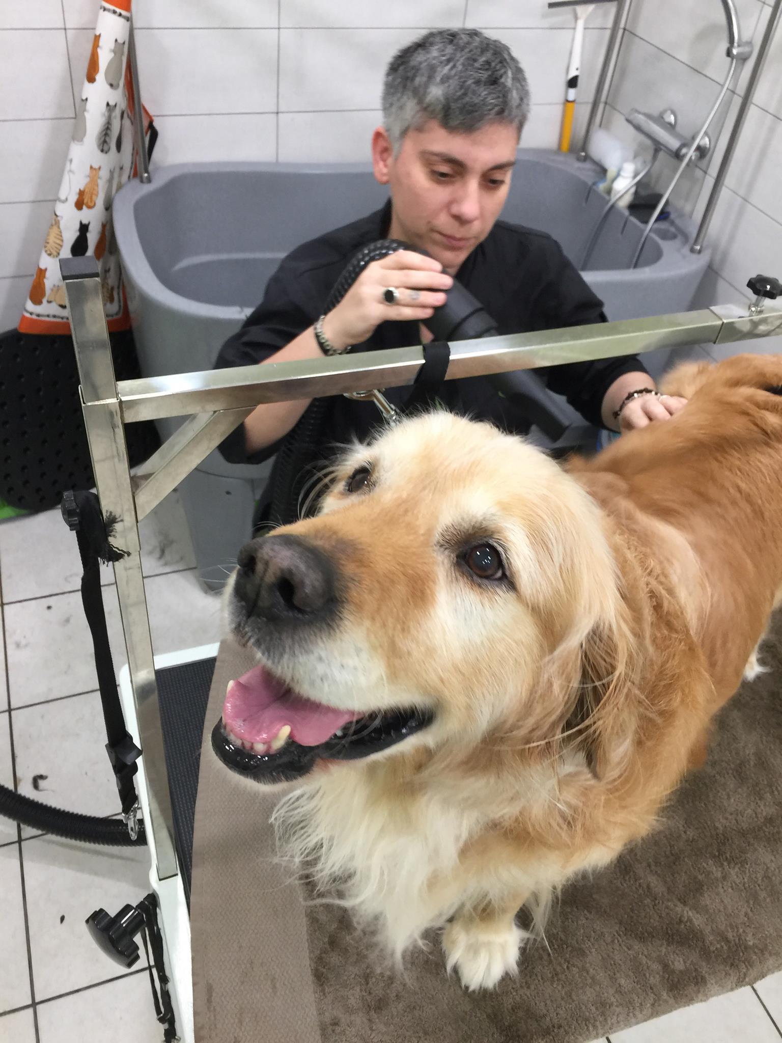 Golden-Retriever-καλλωπισμός-σκύλου-αθήνα.jpg
