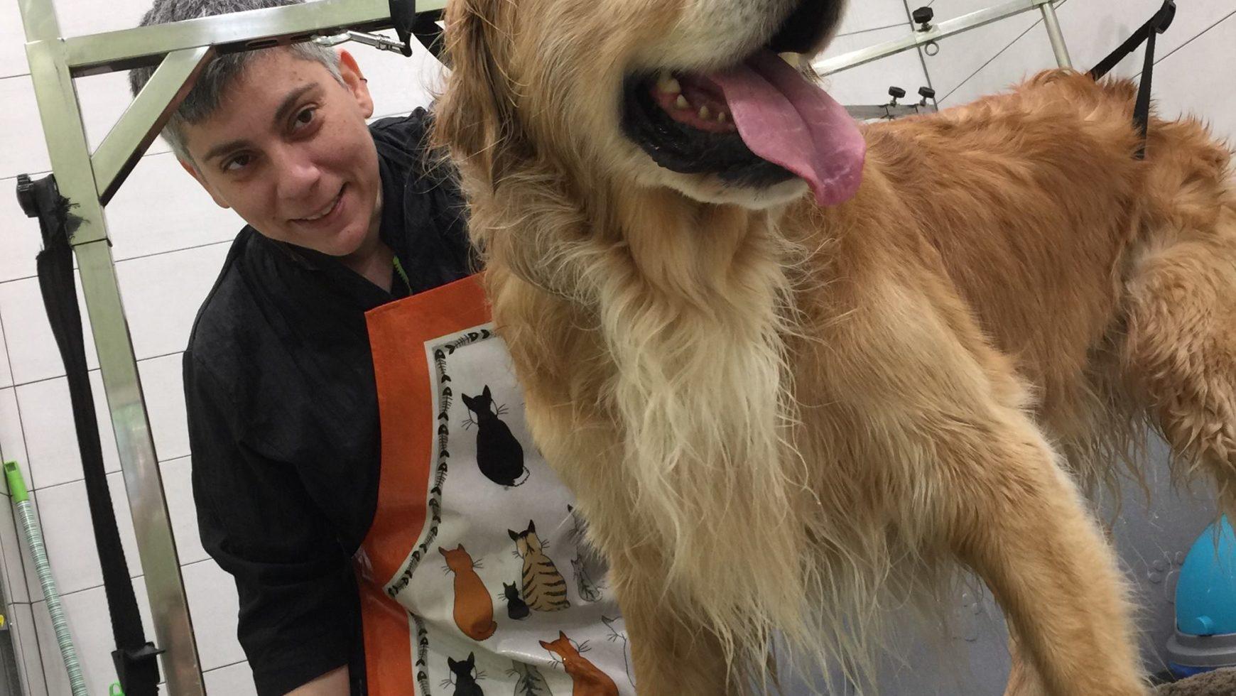 Καλλωπισμός και μπάνιο Golden Retriever – Dog grooming