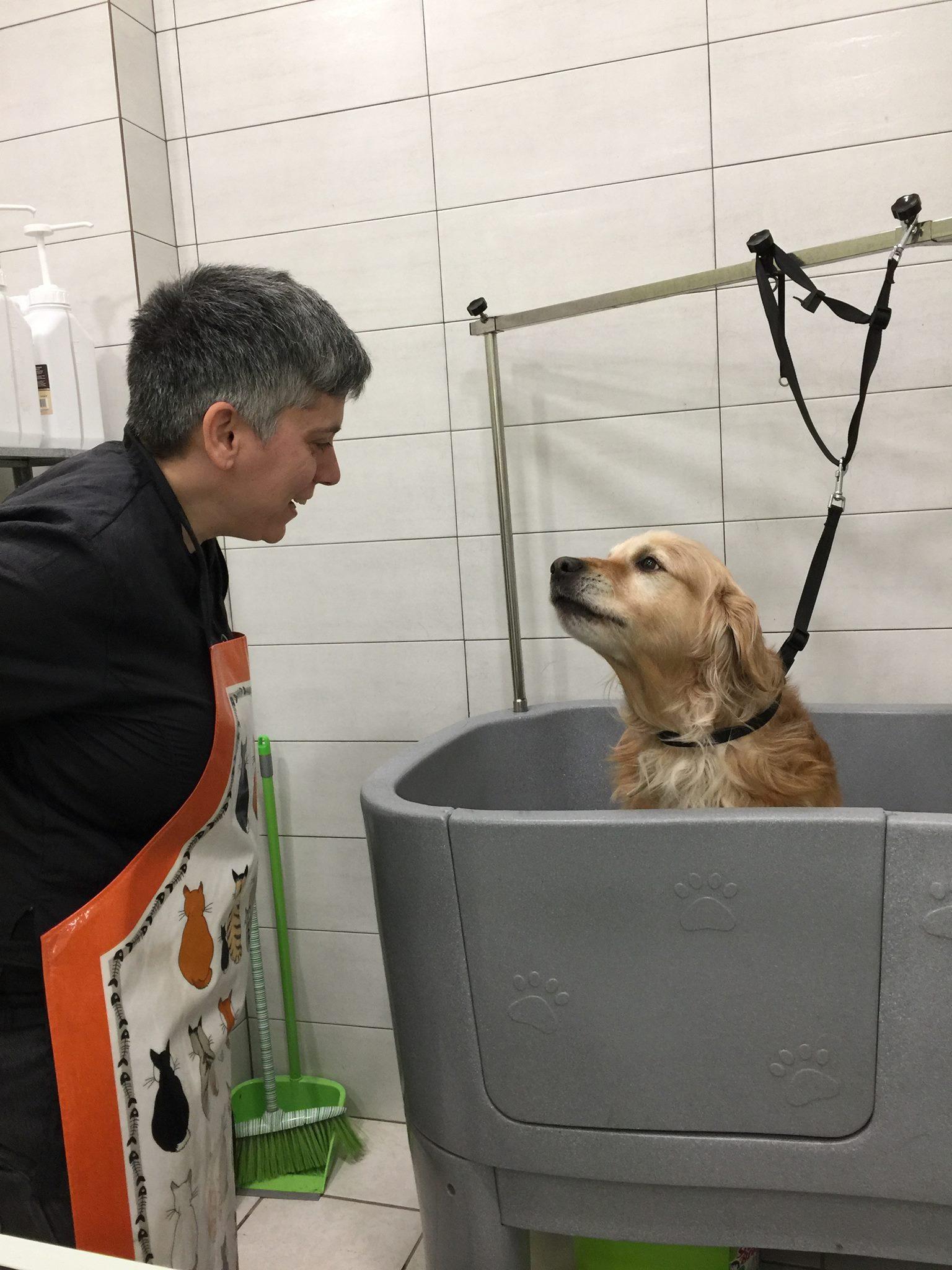 dog-grooming-pagrati-Golden-Retriever.jpg