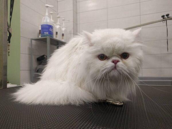 Πότε χρειάζεται κούρεμα η γάτα μου; Πρέπει να την κάνω μπάνιο;
