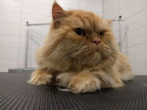 dog grooming cat athens