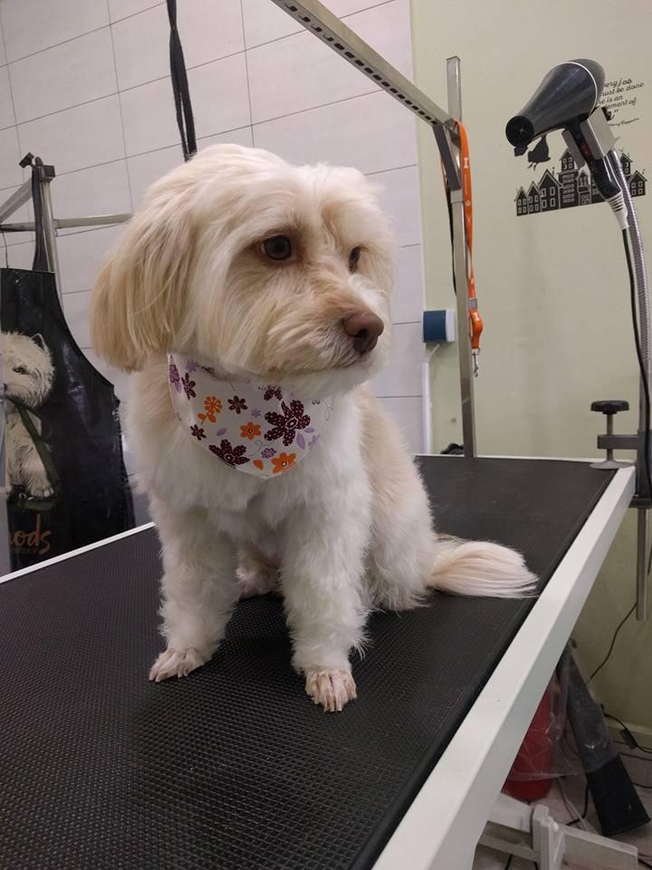 dog-grooming-gatoskilokomosis.jpg