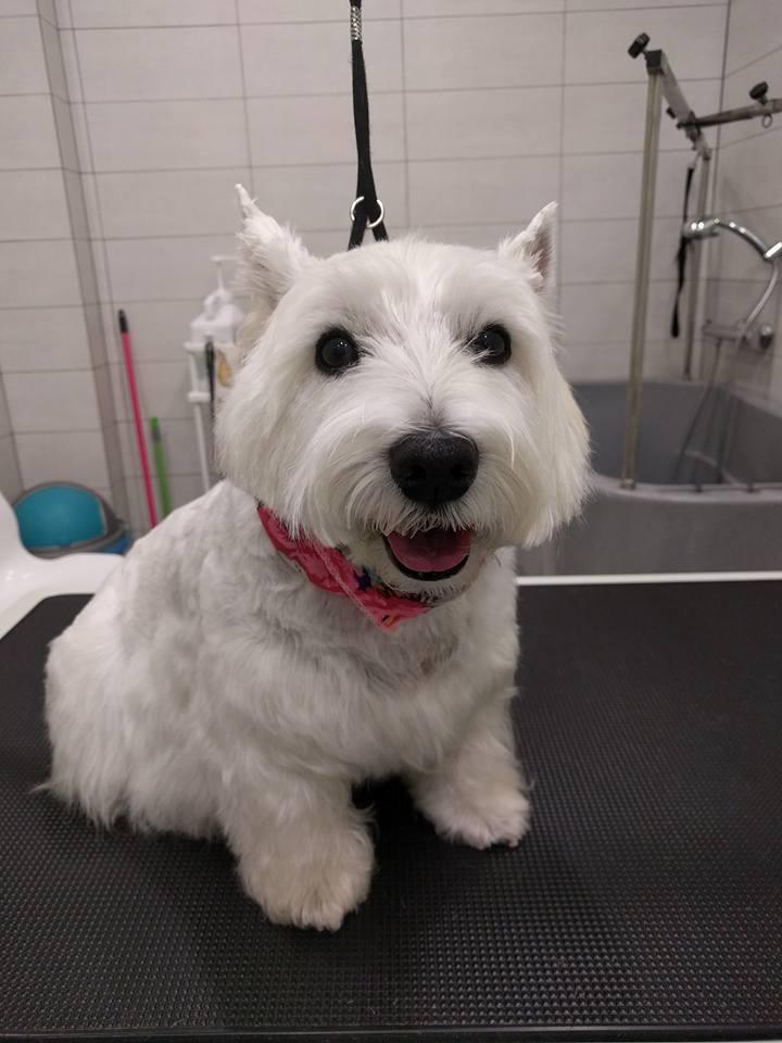 dog-grooming-pagrati.jpg